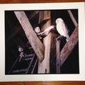 LARGE Pogle Print 2: Owl