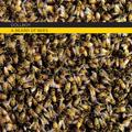 A Beard of Bees