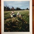 LARGE Pogle Print 3: Field