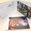 Guillemots Postcard Set